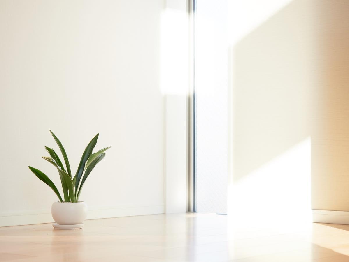 窓辺にある観葉植物