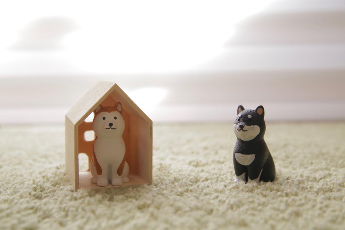 2匹の犬と家に入っているところ